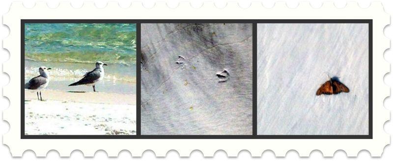 GraytonBch11.BirdB'Fly.LeisaHammett.com