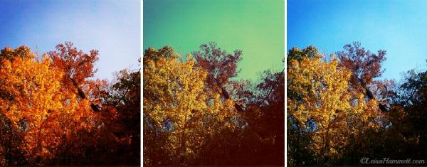 BackYard.Fall12.LeisaHammett.com