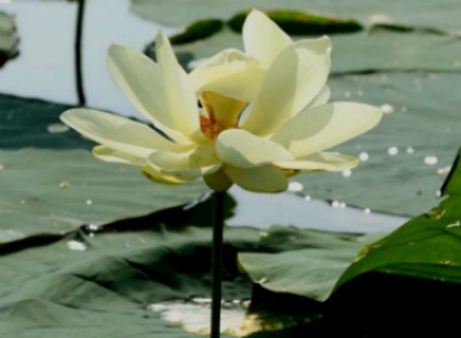 Shylotuscrop byLisaErnst viaLeisaHammett.com